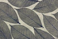 装饰叶子概要 库存照片