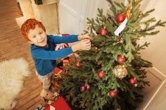 装饰圣诞树的激动的姜男孩 免版税库存图片
