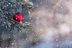装饰在积雪的冷杉分支的天鹅绒红色心脏 华伦泰 免版税库存图片