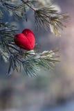 装饰在积雪的冷杉分支的天鹅绒红色心脏 华伦泰 图库摄影