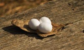 装饰复活节白鸡蛋 免版税库存照片