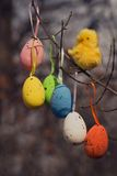 装饰复活节色的鸡蛋和鸡 免版税库存图片