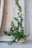 装饰对白色明亮的墙壁的葡萄酒罐的绿草厂在门旁边 在家安置的盆的绿色植物 图库摄影