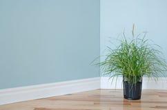 装饰屋子的绿草工厂 图库摄影