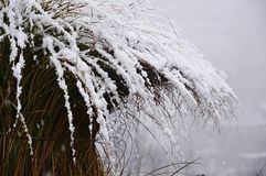 装饰庭院草覆盖与11月一日雪厚实的层数  库存照片