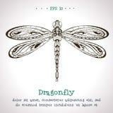 装饰手拉的葡萄酒传染媒介蜻蜓 免版税图库摄影