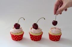 装饰杯形蛋糕用色的莓果的厨师的特写镜头手 免版税库存照片