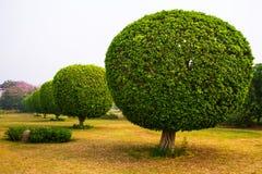 装饰树在莲花寺庙公园  免版税库存照片