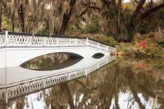 装饰桥梁在橡树和垂悬的青苔下 库存图片