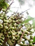 装饰植物一点白色greenpalm花  免版税库存照片