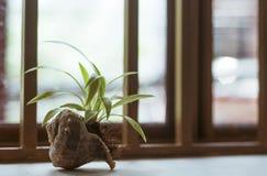 装饰植物罐 库存照片