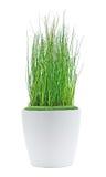 装饰植物 库存图片