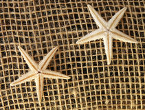 装饰海星 库存图片
