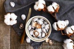 装饰用盐杏子挖坑和棉花花 免版税图库摄影
