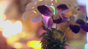 装饰用菠萝和兰花反对霓虹灯 影视素材