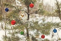 装饰的圣诞树在有减速火箭的effec的一个多雪的杉木森林里 免版税库存照片