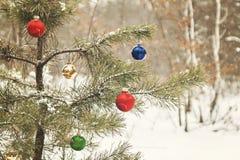 装饰的圣诞树在有减速火箭的effec的一个多雪的杉木森林里 库存图片