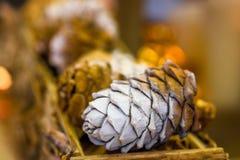 装饰的圣诞树杉木锥体 库存图片