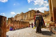 装饰的大象运载在琥珀色的堡垒,斋浦尔,拉贾斯坦,印度的司机。 库存照片