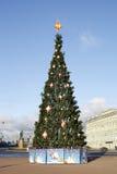 装饰的杉树 免版税库存照片