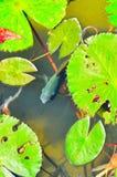 装饰的池塘全景视图  免版税图库摄影