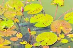 装饰的池塘全景视图  库存照片