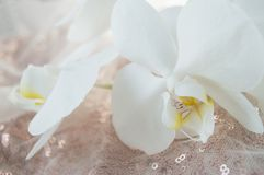 装饰的礼物盒与反对发光的织品背景的一朵兰花花 库存照片
