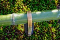 装饰的绿色竹子在庭院 库存图片
