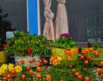 装饰的花在农村房子 库存图片