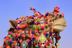 装饰的骆驼, Jaisalmer,印度画象在沙漠节日的 免版税库存照片