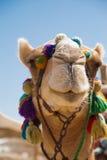 装饰的骆驼头 免版税库存图片