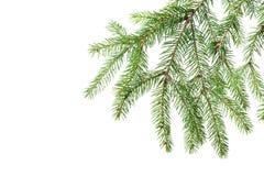装饰的绿色冷杉分支 免版税图库摄影