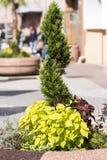 装饰的绿色植物树篱 免版税库存照片