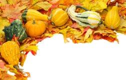装饰秋天万圣节查出的感恩 免版税库存照片