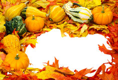 装饰秋天万圣节查出的感恩 库存图片
