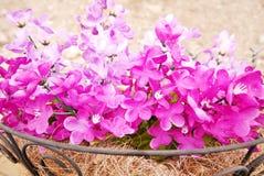装饰紫色 免版税库存图片