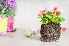 装饰罐为种植开花在庭院或阳台里 免版税图库摄影