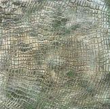 装饰膏药纹理,装饰墙壁,灰泥纹理,装饰灰泥 库存照片