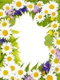 装饰花卉框架 免版税图库摄影
