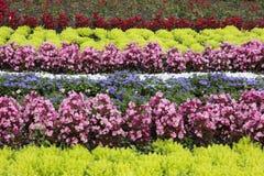 装饰花圃 免版税库存图片