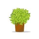 装饰花盆 整理在罐的绿色树 免版税图库摄影