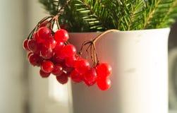 装饰荚莲属的植物 库存照片