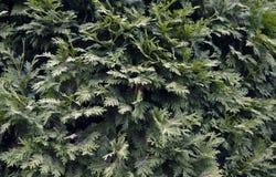 装饰荨麻摘要白色绽放明亮的五颜六色的秀丽颜色花卉黄色桃红色夏天种植叶子植物群植物花gr 图库摄影