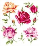 装饰葡萄酒玫瑰 传染媒介套花和芽 库存例证