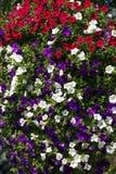 装饰街道的花照片  库存照片