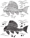 装饰鱼鲶鱼 免版税图库摄影