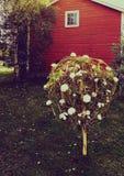 装饰结构树 库存照片