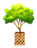 装饰绿色植物 库存照片