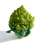 装饰broccoflower -在白色背景隔绝的brocolli 库存照片