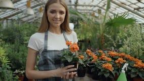 围裙的微笑和在手上的快乐的少妇庭院工作者画象拿着花自温室 股票视频